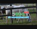 うまもの 増刊号北海道馬産地巡りの巻 1日目 その3