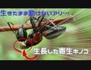 キノコに操られるアリ【森林環境音ASMR風】