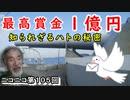 「購入に一億円!?」軍鳩・伝書鳩の秘密に迫ってみた!
