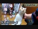 家猫になって初めての朝【野良猫の保護二日目 1】