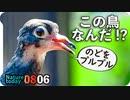 0806【鳩の幼鳥!?】カルガモ親子奇形。ラブラブハト。カマキリ捕食、オイカワ、キアゲハ水飲み、黄色いアカミミガメなど【今日撮り野鳥動画まとめ】身近な生き物語