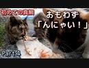『喋りながら食べる猫』普段アジしか食べたことのない野良猫に真鯛あげたらどうなる?【三毛猫が保護されるまで Part4】