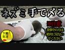 【グロ注意】顔面破壊ネズミ 苦痛からの解放