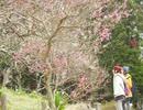 平日深呼吸。 #3 神奈川県三浦半島<前編> 花の匂いに誘われて深呼吸。
