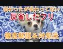 反省したフリはなぜ起きる?犬の心理とを解説&改善法