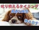 叱り終えるタイミングの最適解説&対処法【犬のしつけ】