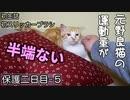 食べた缶詰を即行エネルギーに変換する猫【野良猫の保護二日目 5】