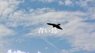 【AIきりたんオリジナル曲】青い鳥