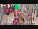 消防士はペット病院に閉じ込められた愛犬を救出