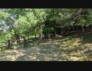 【ツクツクホーシ】公園の木陰で聴くセミの声【ミーンミーン】