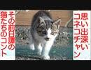 公園の童帝猫、人妻猫を巡ってコントを繰り広げる
