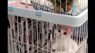 上下の猫ちゃん、お互いが見えてるの!?