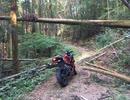 初めての林道は、Ninjaだった