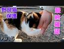 噛む、鳴く、フミフミを大爆発させる野良猫 & 最後の乗車【三毛猫が保護されるまで Part5】