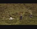(乗員無事)エバーグレーズに小型飛行機墜落&救助(米08/27)