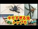 【キモ過ぎ注意】世界のグロテスクな虫【トップ5】
