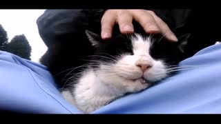 【ご予約様、ご来店します】~猫のヘッド・マッサージ~