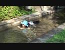 【遊んでみた】プールに行けないので、二上山ふるさと公園で水遊びをするあい❤空いていて良かったwww
