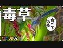0902【鳥が毒草食べて冷や汗】カルガモ若鳥やカラスの鳴き声、ヒヨドリとハトの幼鳥、黒いアカミミガメ【今日撮り野鳥動画まとめ】身近な生き物語