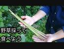 【ぴ】蕗、紫蘇、三つ葉:自然を食べよう!