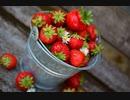 【東方自作アレンジ】Strawberry Catastrophe!!【東方夢時空】