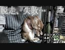 【ウサギさんが苦手な爪切りから逃亡しようとした結果と固まった毛玉のブラッシング】前回の続き うさぎたいむ7