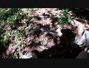 (とあるトリガーの研究回w)変態忍者の、有害鳥獣駆除従事活動記・その122