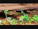 【ASMR】ホモと聴く森の癒し音【自然音】