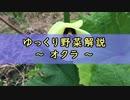 ゆっくり野菜解説 part2 オクラ