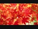 【東方アレンジ】秋の訪れ ~ Fall has fallen.(原曲:フォールオブフォール 〜 秋めく滝/稲田姫様に叱られるから)