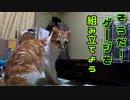 暴れん坊の猫たちのためにケージを組み立てる