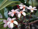 世界にひとつだけの花:合唱