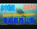 水中動画(2020年9月8日)in 東扇島西公園