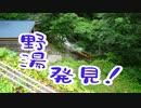 北海道一周旅行シリーズ2020道南・完結 ~野湯「熊の湯」と活あわび料理