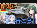 【1080p対応】東北ずん子のもっとドタバタ釣行記 新潟で私と魚釣りしませんか?