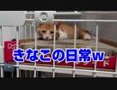 【絶体絶命】猪に喰われそうになった野良猫を思い切って保護してしまった結果【part10】