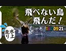 0921【飛べない奇形のカルガモが飛んだ】スズメの水浴び、カラスにイソシギ、ハクセキレイ。新米稲刈り、トノサマガエルが逃げる【今日撮り野鳥動画まとめ】 #身近な生き物語