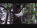 ホモと見るSASUKEをする猫