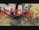 【クローラブチギレ】2020稲刈りはトラブルだらけ!前編【オイル漏れ】