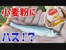 【小物釣り】小麦粉だけで魚は釣れるのか検証していたらまさかの魚が!