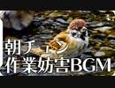 【作業用BGM】癒やしのスズメの群れの朝チュン水浴び【作業妨害用BGM】