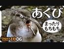 1006【イソシギのあくび可愛い】ハクセキレイの鳴き声や捕食、カワウの正面顔。スズメの水浴びに綺麗な緑金のハエ、カワセミ【 #今日撮り野鳥動画まとめ 】 #身近な生き物語