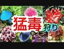 【キモ過ぎ注意】秋の~猛毒キノコ狩り~対決!!【ヤバイ毒キノコ見付けた方の勝ち】
