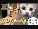 三毛猫とパンケーキ【黒猫とパンケーキ】【踊ってみた】