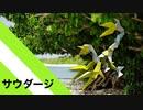 """【折り紙】「サウダージ」 19枚【郷愁】/【origami】""""Saudade"""" 19 pieces【Nostalgia】"""
