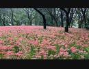 2020年10月09日1枠目 リベンジ!彼岸花がたくさん咲いている公園があるらしい
