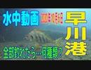 水中動画(2020年10月6日)in 早川港