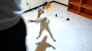 引っ越した新居2日目の猫の様子がおかしいです…