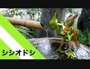 """【折り紙】「シシオドシ」 22枚【鹿威し】/【origami】""""Shishiodoshi"""" 22 pieces【Shishi-odoshi】"""