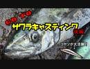 【船釣り】GoTo サワラキャスティング! 後編